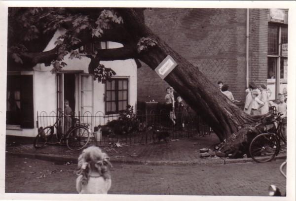 Onder de rieten dakjes met omgevallen boom