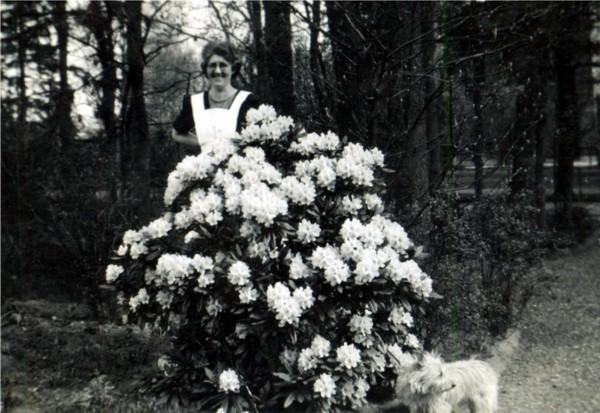 Jannetje Roos